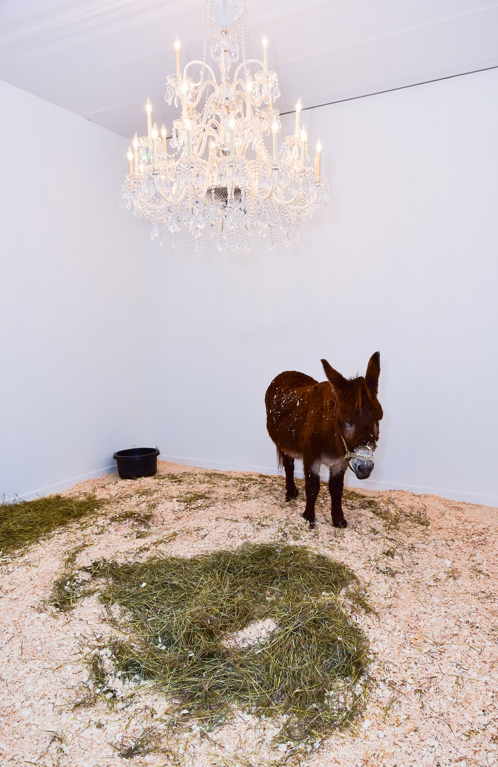 scandale project, scandaleproject, Maurizio Cattelan, Daniel Newburg Gallery, Frieze,